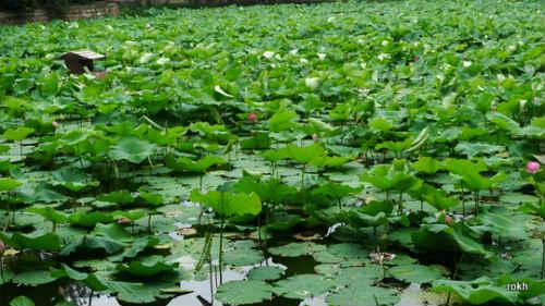 Cuihu Lake @ Kunming, China